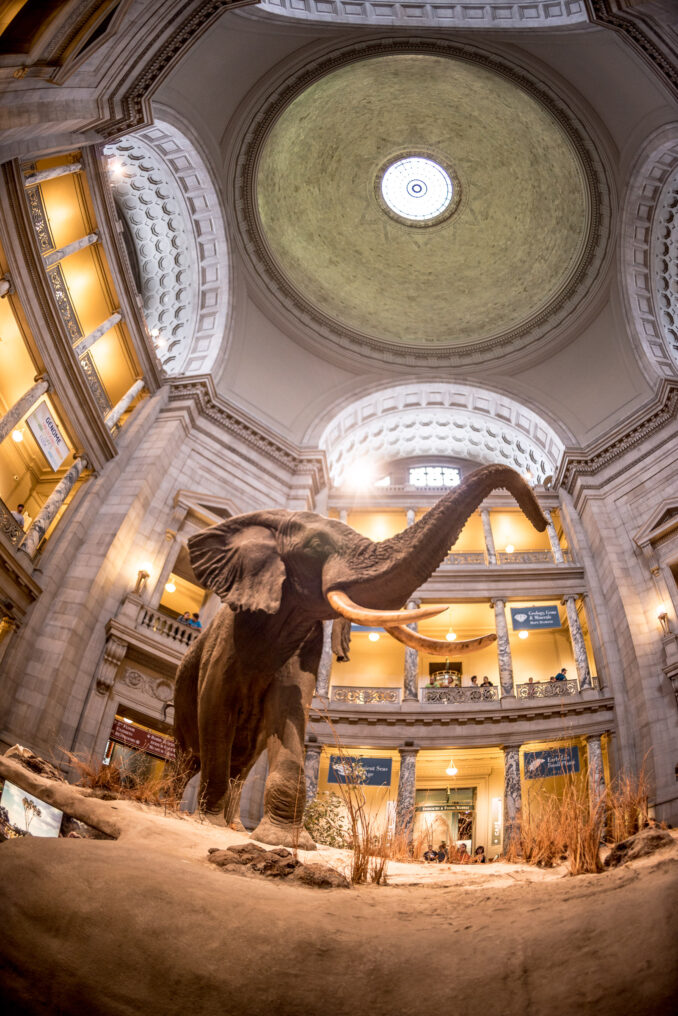 Photo of the Smithsonian Museum of Natural History taken with a Nikon 16mm ƒ/2.8D fisheye lens