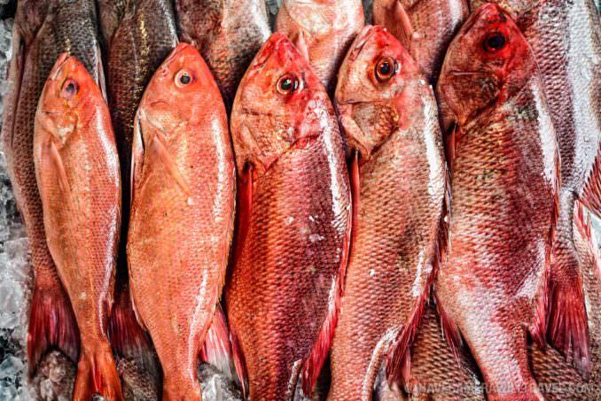 Red Snapper at Washington Fish Market