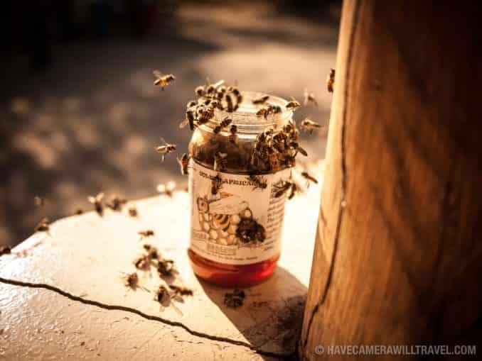 Tarangire National Park African Bees