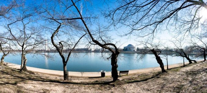 Washington DC Cherry Blossoms February 6, 2017