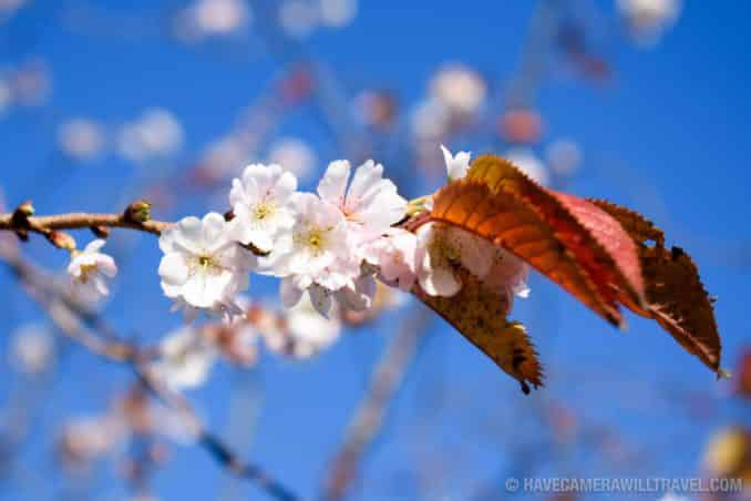 Nikon D3400 Photo