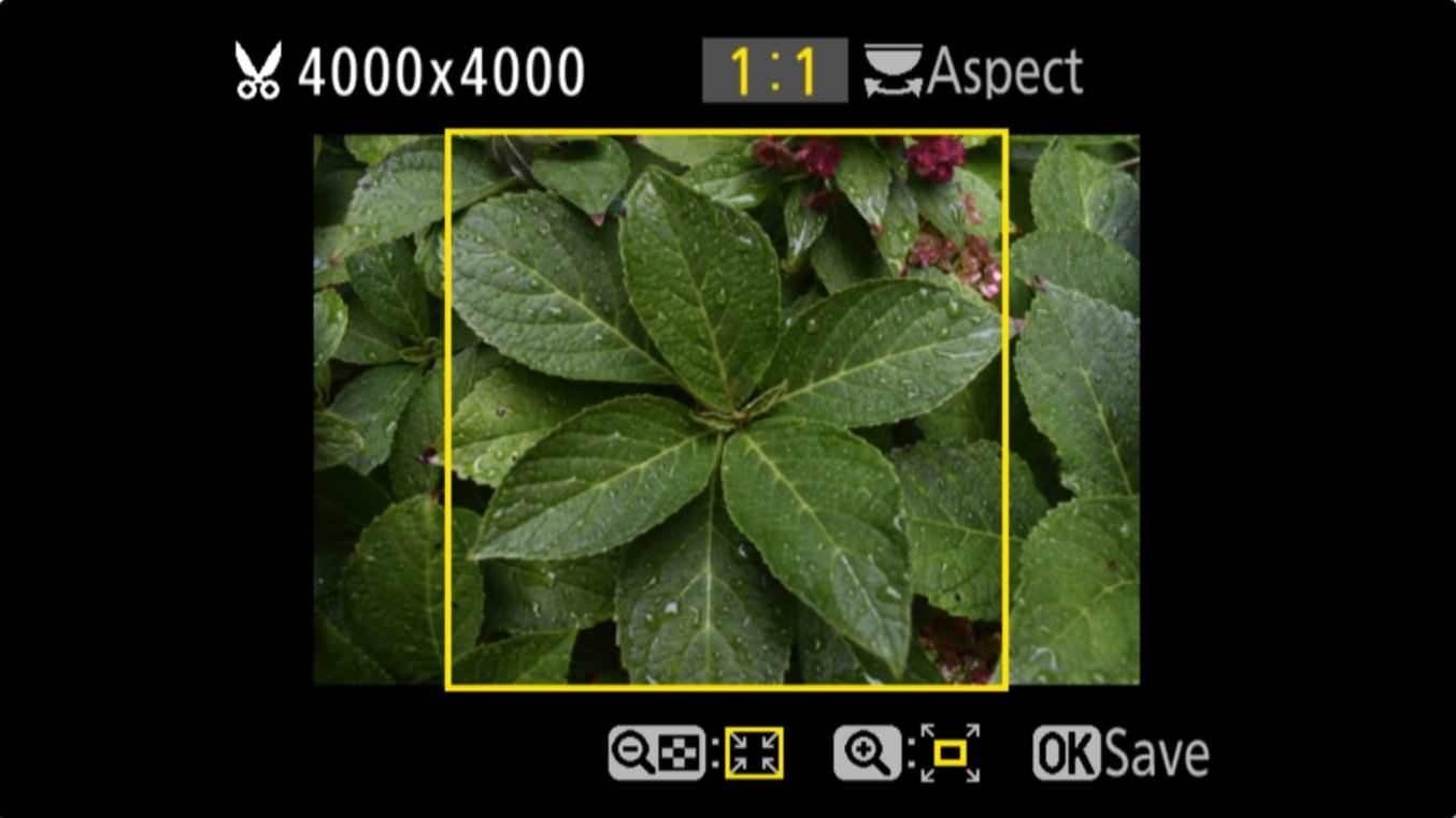 Nikon D3400 Aspect Ratio Trim 6