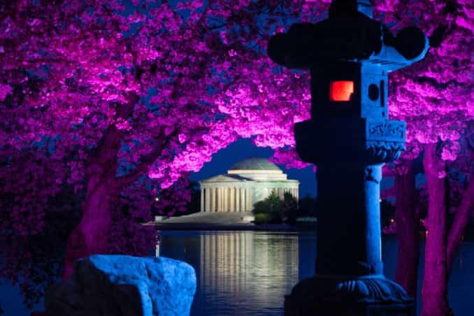 DC Cherry Blossom Watch Update: April 11, 2018