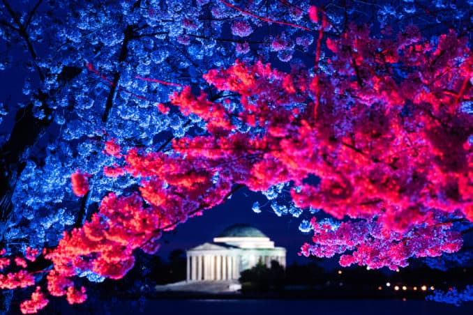 DC Cherry Blossom Watch Update: April 6, 2018