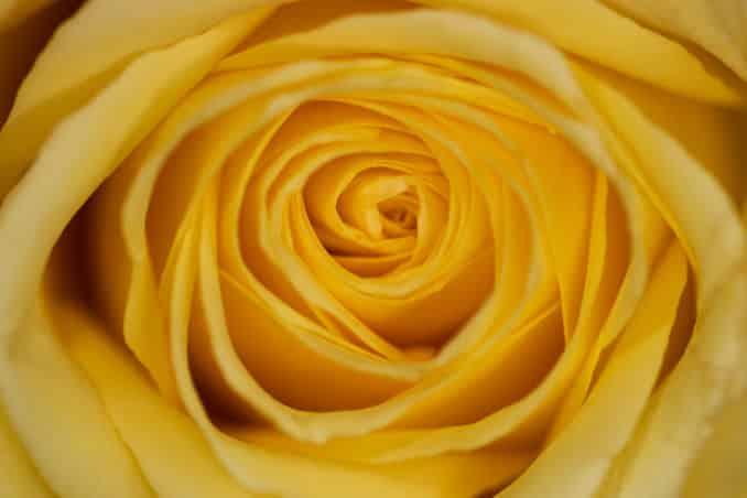 Flower Macro Close-up