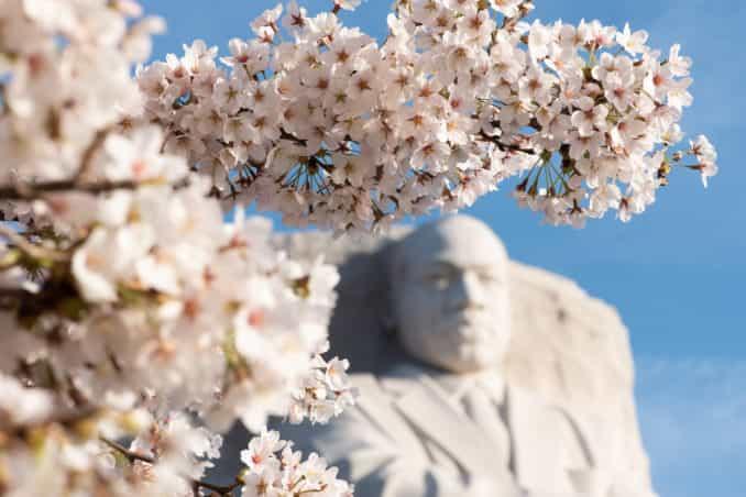 Washington DC Cherry Blossoms - DATE, 2019