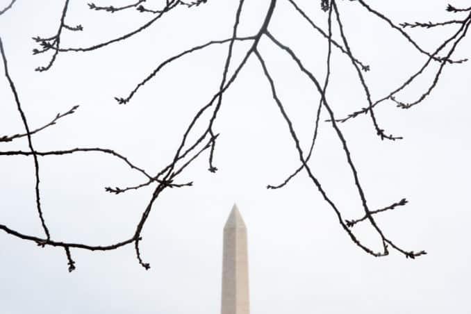 Washington DC Cherry Blossoms with Washington Monument - February 7, 2016