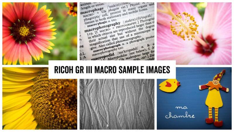 Ricoh GR III Macro Sample Images